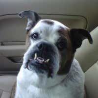 Maxi: Back seat flosser